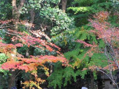 La forêt du Shinshoji Tempel