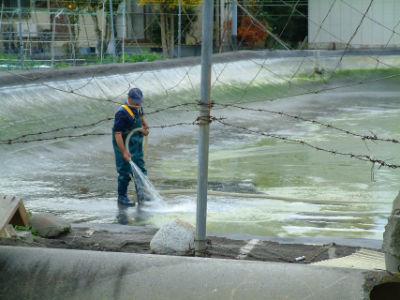 Nettoyage d'un bassin