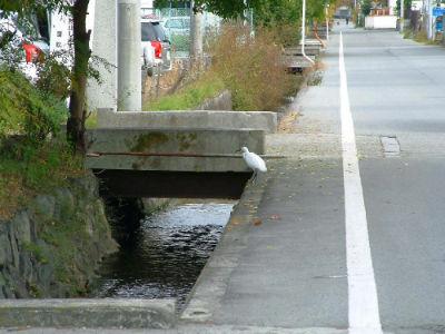 Ruisseau devant sakai
