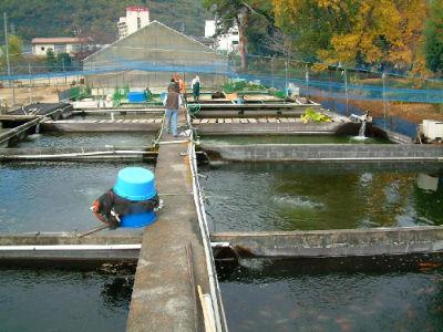 Bassins exterieurs Sakai