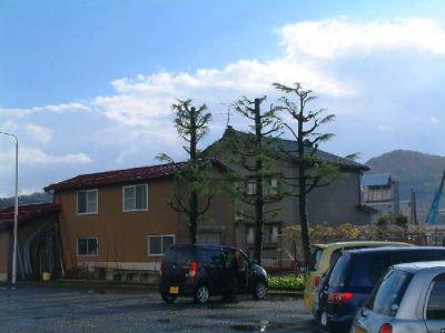 Taille d'arbre publics