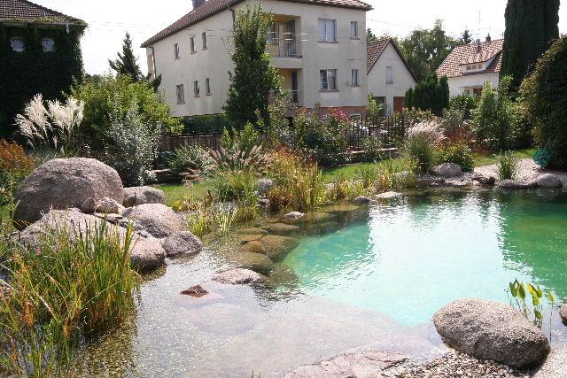 Le principe du lagunage - Plante de bassin filtrante ...