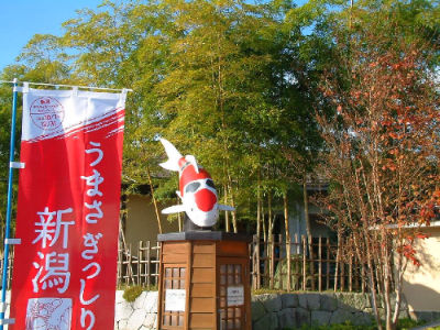 Magnifique musée du koi