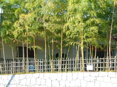 Bambous dans le musée du koi