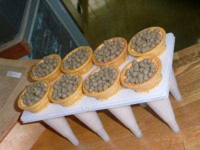 La nourriture des Kois du musée