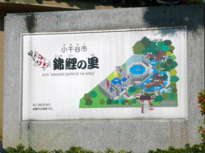 Le plan du musée