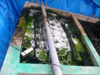 La filtration de Marusai