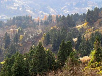 La région du Mushigame