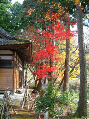 Temple jardin 4