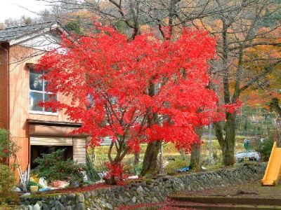 Temple jardin 11