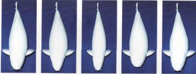 Le body des Tatégoi