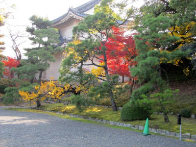 Végétation du mur extérieur de Ninomaru