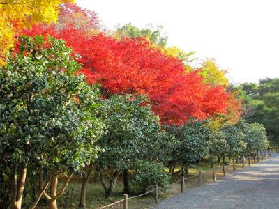 Le jardin de Ninomaru