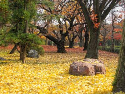 Les feuilles de ginko