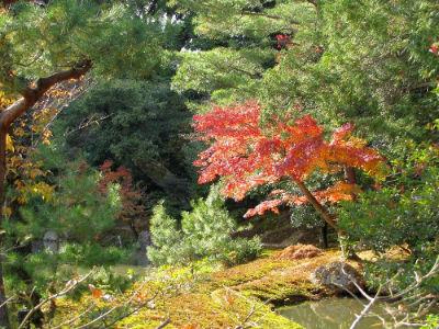 Le jardin de Rokuon-Ji