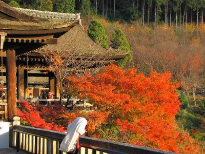 Vue du haut du Kiyomizu Temple